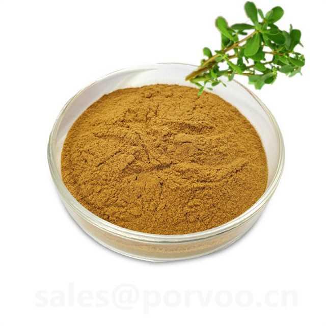 100% Pure Natural bacopa monnieri extract powder