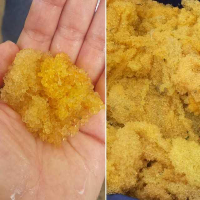 Flying fish roe / caviar gold fish