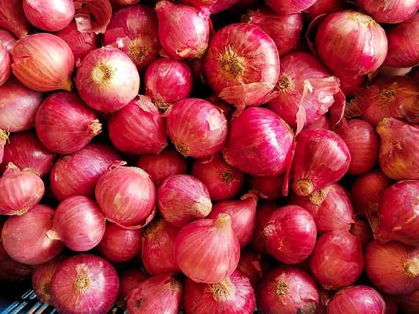img 1 Onion1