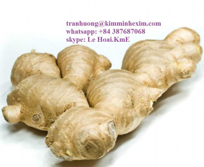 ginger export