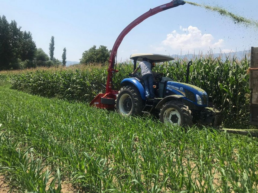 Maize Corn Silage Row Independent Harvester Machine