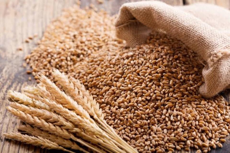 Wheat (Rajasthan)