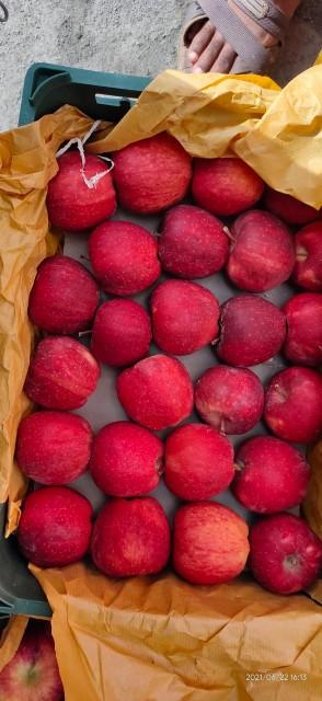 Fresh Irani Apple