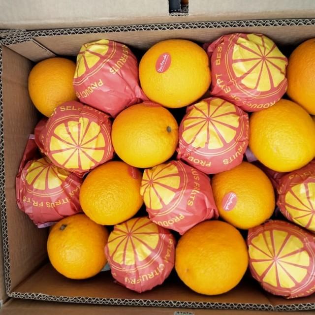 Citrus origin Egypt