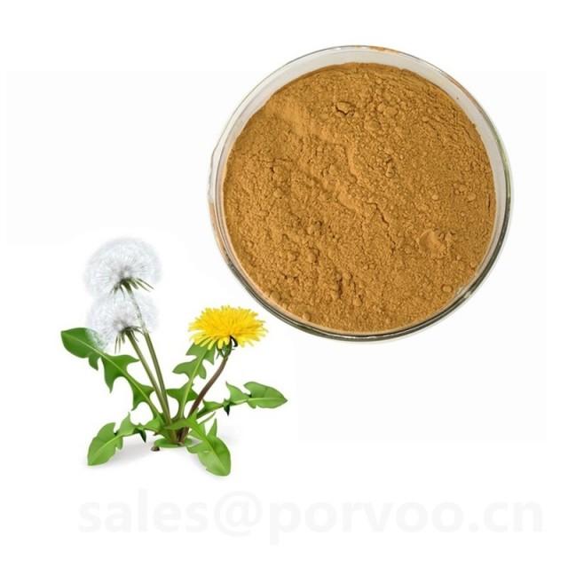 Health Supplement Natural Dandelion Extract , Dandelion Extract