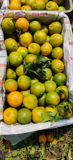 Indian Orange