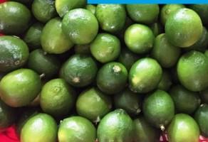 FRESH LEMON / LIME FRUIT