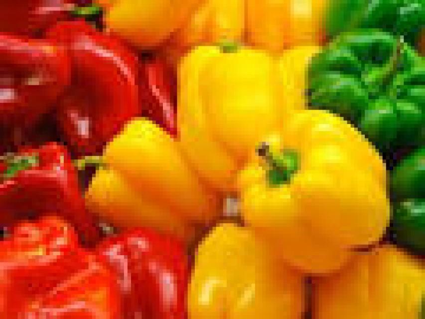 Bulk Vegetable Exporter