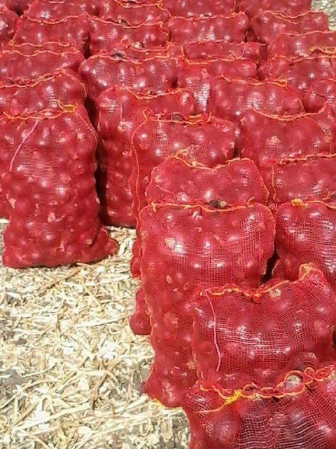 Red Onion For Sell
