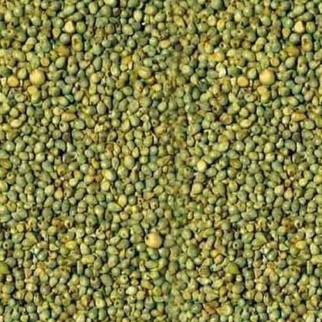green millet 500x500