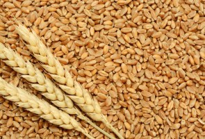 Indian Wheat