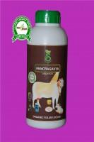 Panchagavya Liquid
