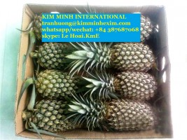 PINEAPPLE FRUIT WITH HIGH QUALITY- FROZEN/FRESH/PUREE PINEAPPLE FRUIT