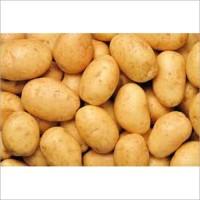 Potato & Potato Seeds